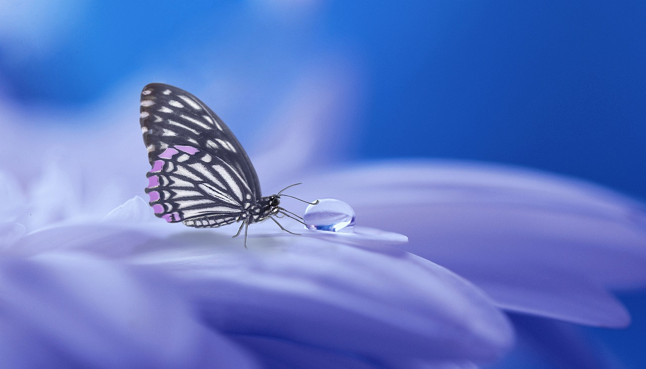 butterfly transformation - Home